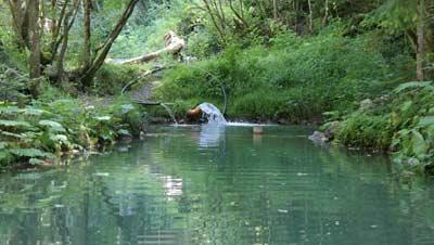 Fischteich und s ge marul im biosph renpark gro es walsertal for Fischteich wasser reinigen